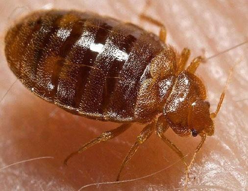 se prot ger des insectes piqueurs le blog des r pulsifs anti rongeurs et anti insectes. Black Bedroom Furniture Sets. Home Design Ideas