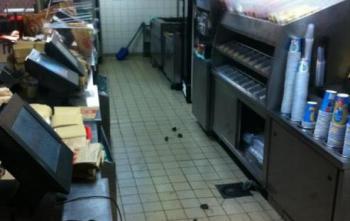 Invasion de souris dans un restaurant parisien
