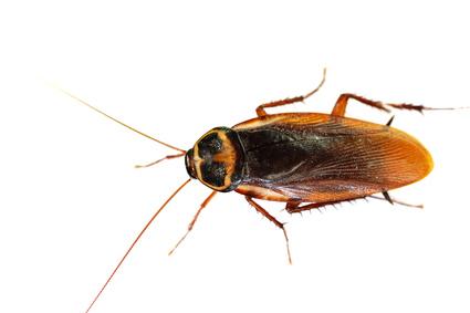 un cafard dans sa tasse le blog des r pulsifs anti rongeurs et anti insectes. Black Bedroom Furniture Sets. Home Design Ideas
