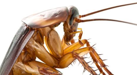 Des outils de qualité pour éradiquer les insectes sur Repulsif.fr
