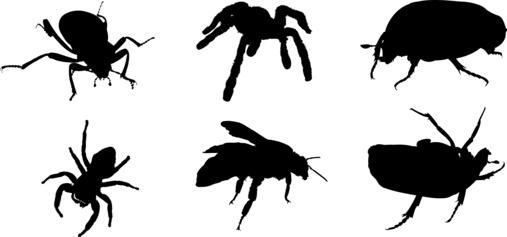 les cafards d jouent les pi ges le blog des r pulsifs anti rongeurs et anti insectes. Black Bedroom Furniture Sets. Home Design Ideas